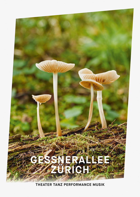 002_Gessnerallee_www.schaubstierli.com