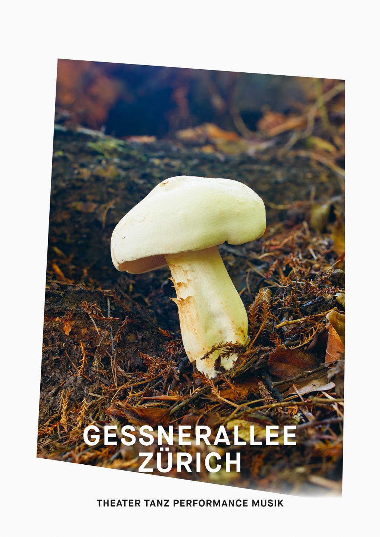 003_Gessnerallee_www.schaubstierli.com
