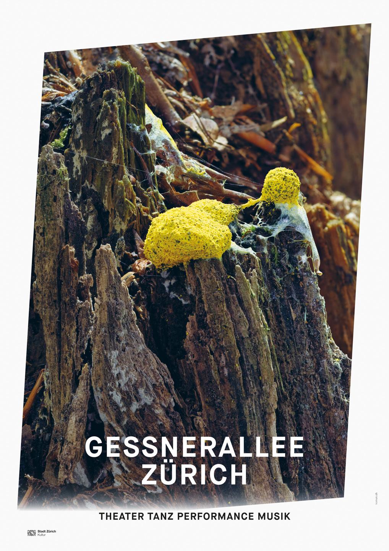 007_Gessnerallee_www.schaubstierli.com
