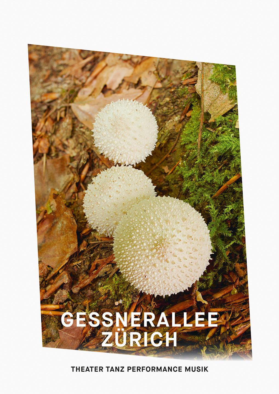 006_Gessnerallee_www.schaubstierli.com